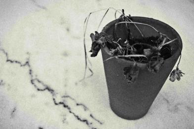 L'usure du temps - Fleur fanée (léger).jpg